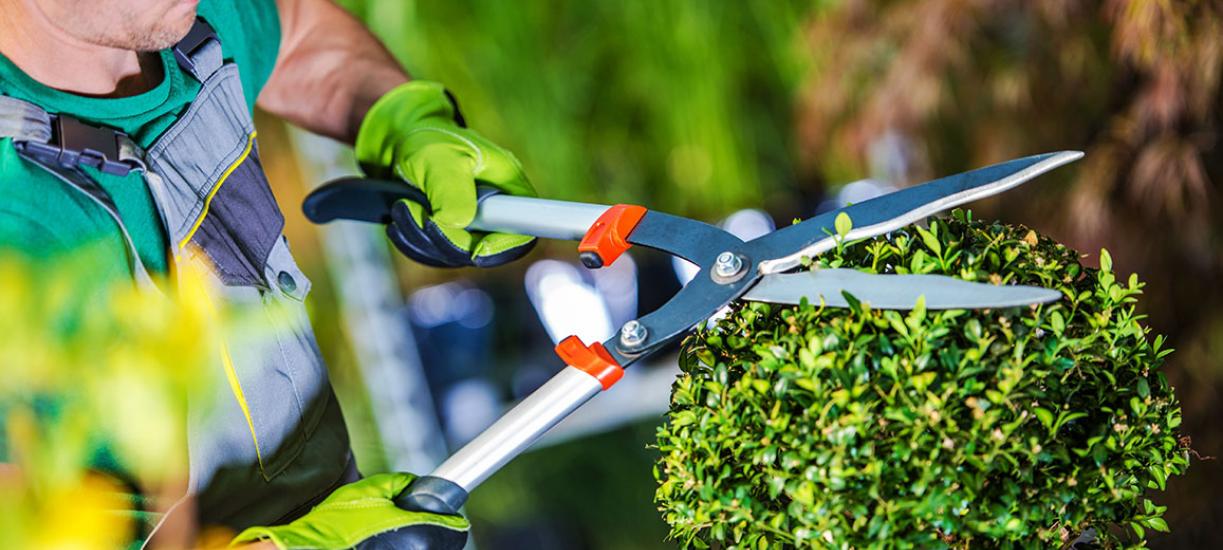 Cmonjardinier vous conseille sur les techniques de taille d'arbustes et de massif.