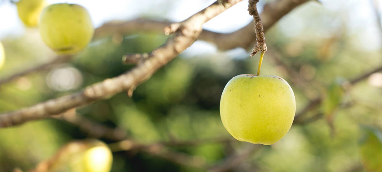 La taille des arbres fruitiers selon Cmonjardinier