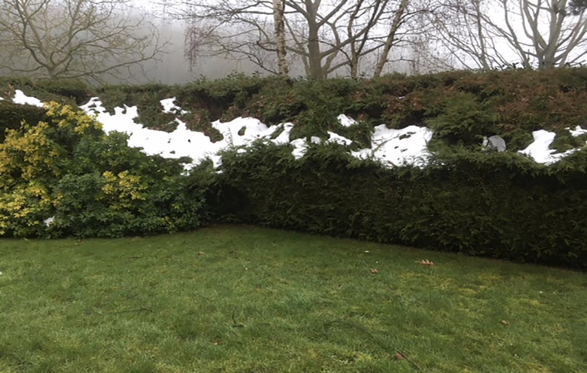 degats-de-neige-jardin