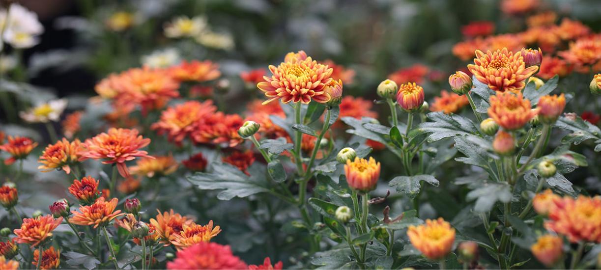 Cmonjardinier vous aide à construire des massifs de fleurs