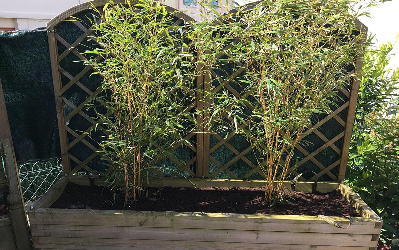 planter des bambous en bac