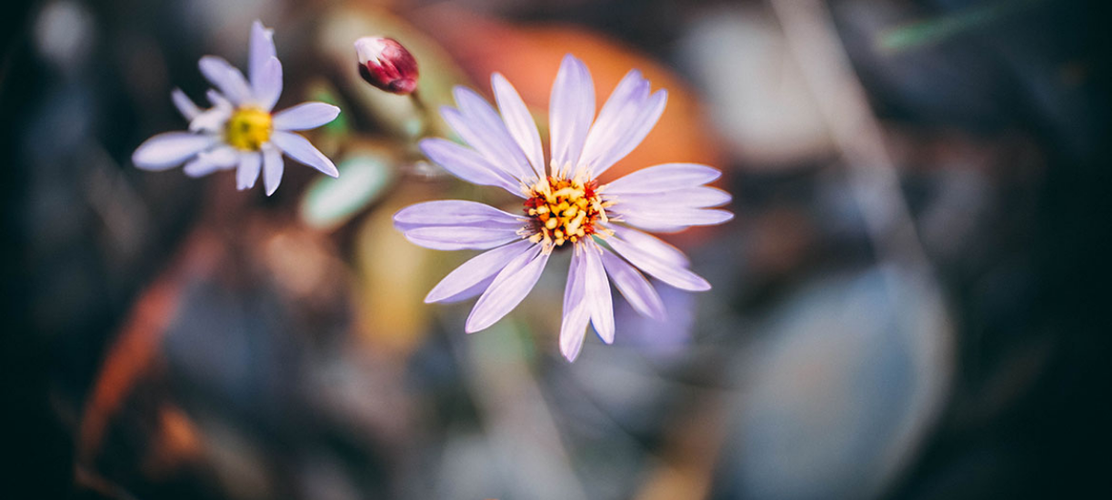 Connaissez-vous les différents types de fleurs annuelles ? Cmonjardinier vous dit tout.