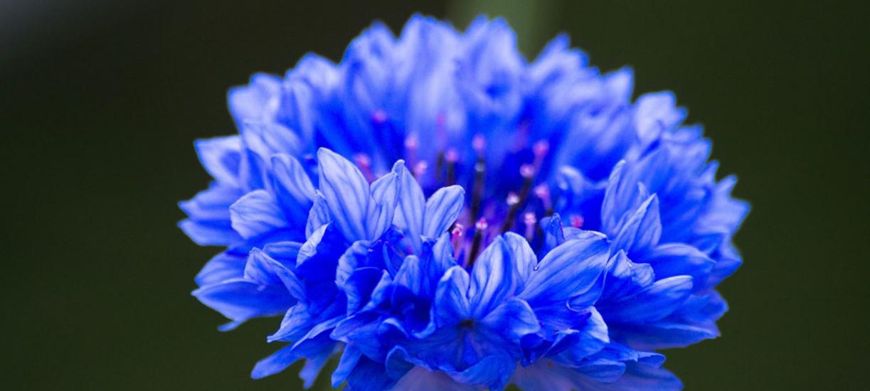 Cmonjardinier vous aide dans le choix, la culture et l'entretien des plantes annuelles.