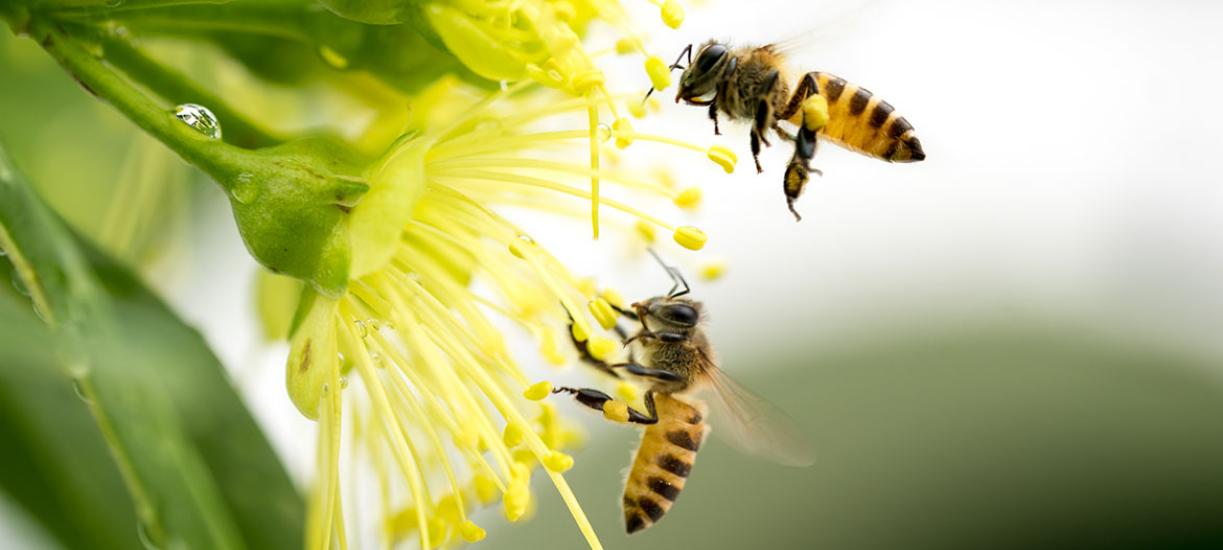Cmonjardinier vous explique le rôle des plantes mellifères