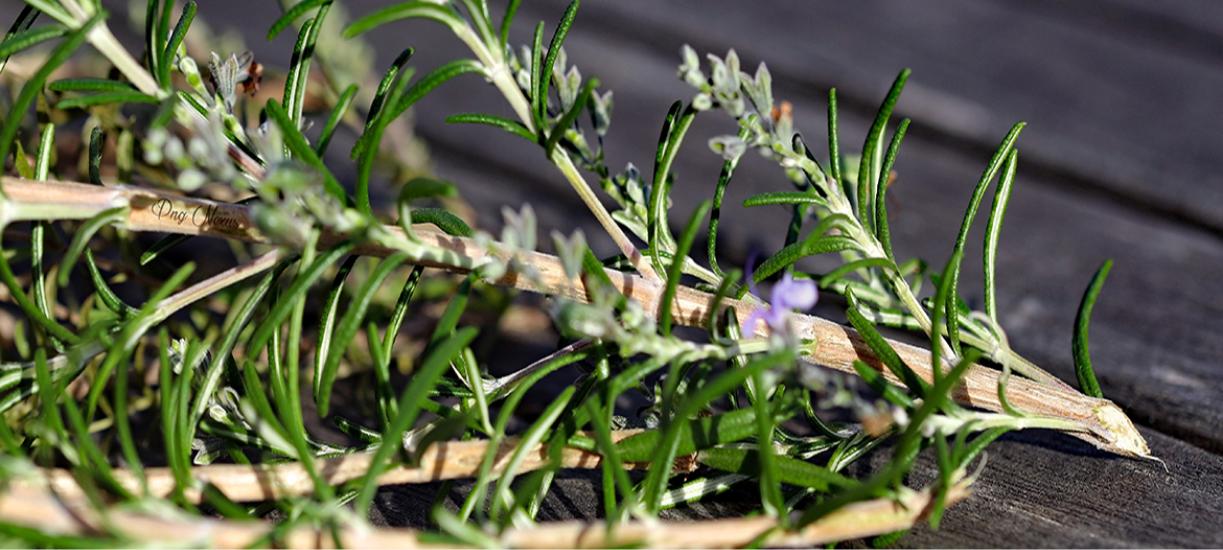 Cmonjardinier vous explique comment tailler les plantes aromatiques.