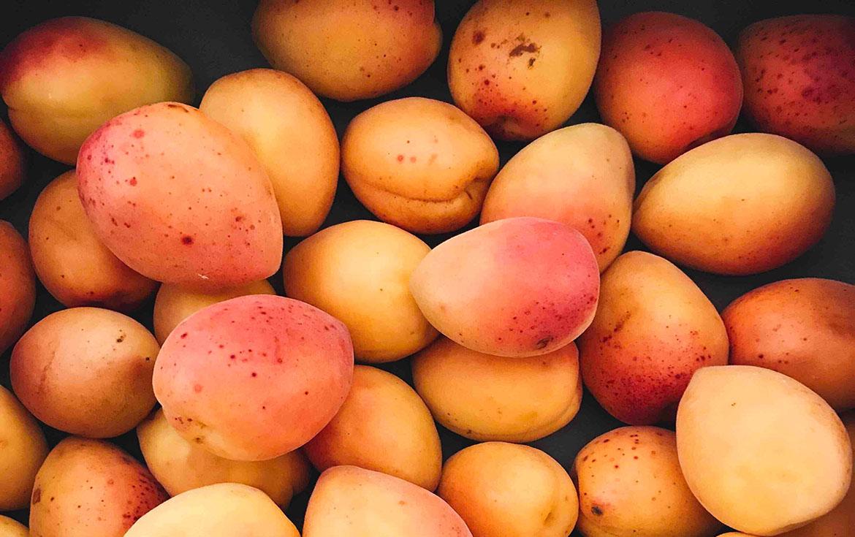 détecter les maladies des abricotiers