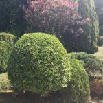 L'entretien d'un jardin paysagé à Chennevières sur Marne