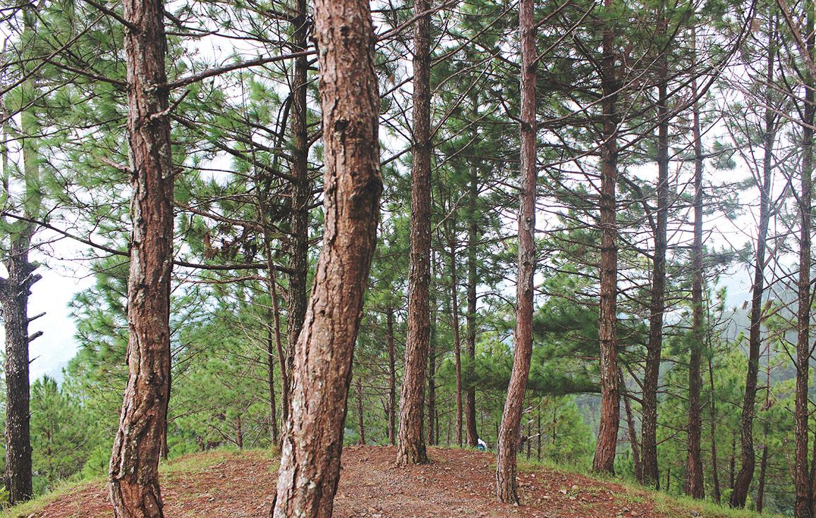 chauler les arbres