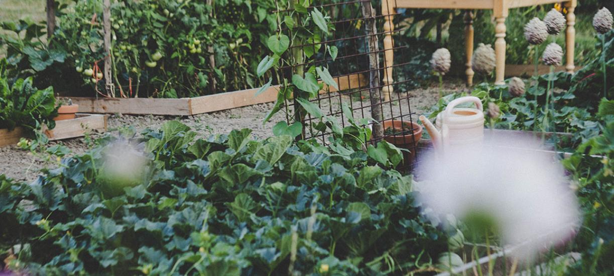 Cmonjardinier vous explique ce qu'est la permaculture.