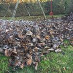 entretien d'automne