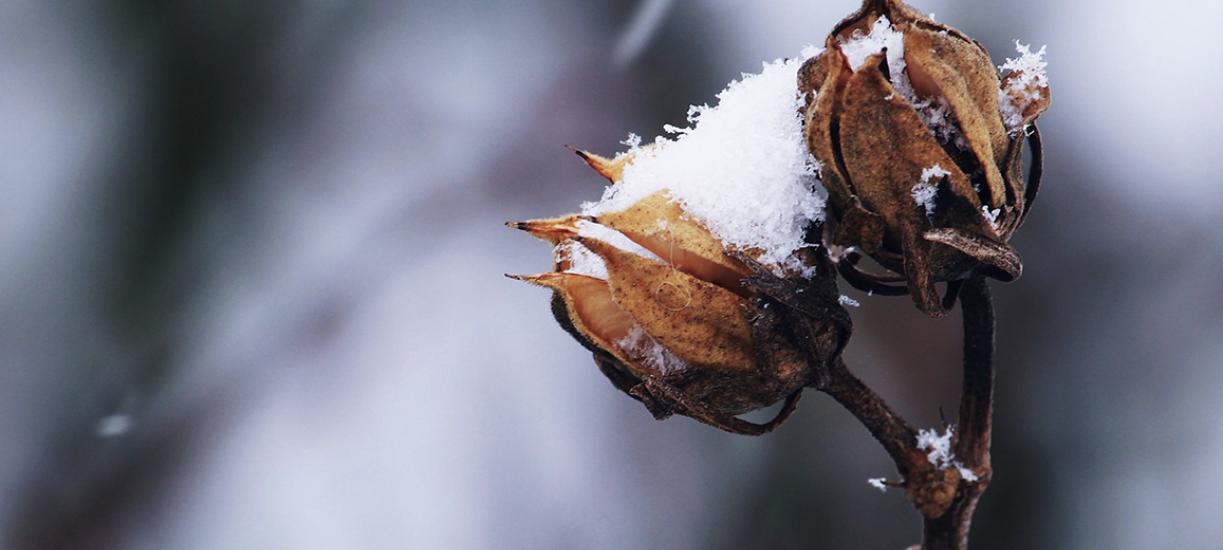 Cmonjardinier vous dit comment bien hiverner les plantes.