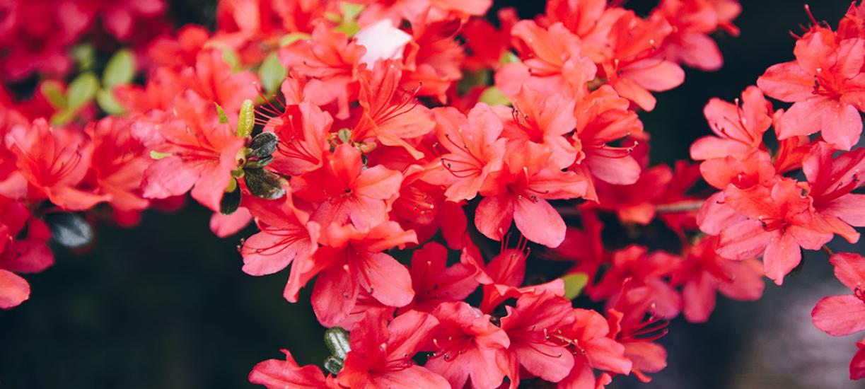 Quelles plantes choisir sur sols humides ?