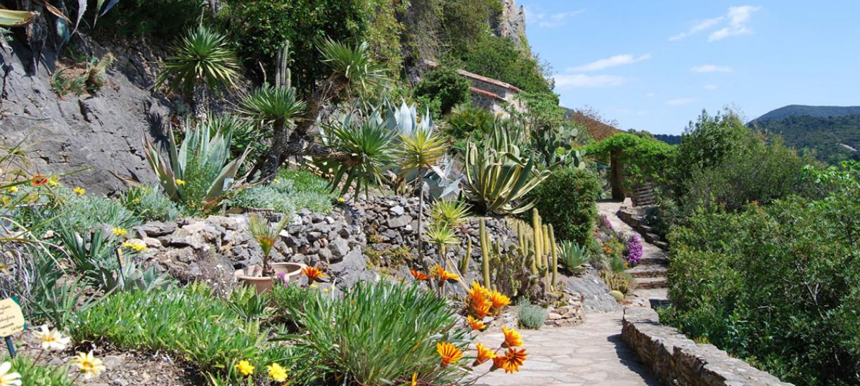 Cmonjardinier vous explique quelles plantes choisir pour avoir un beau jardin méditerranéen.