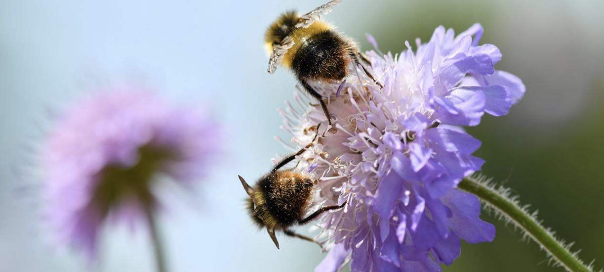 Comment encourager la biodiversité ?
