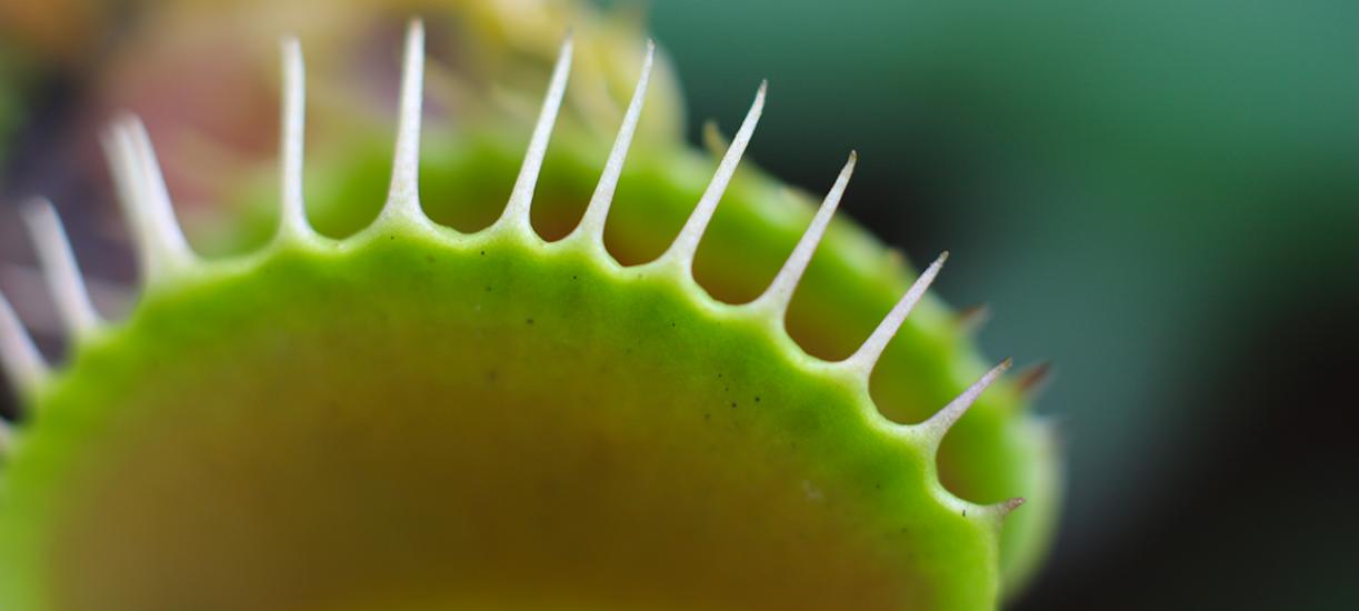 Tout savoir sur les plantes carnivores.