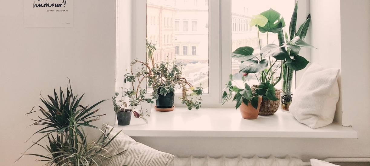 Comment avoir de belles plantes vertes chez soi ?