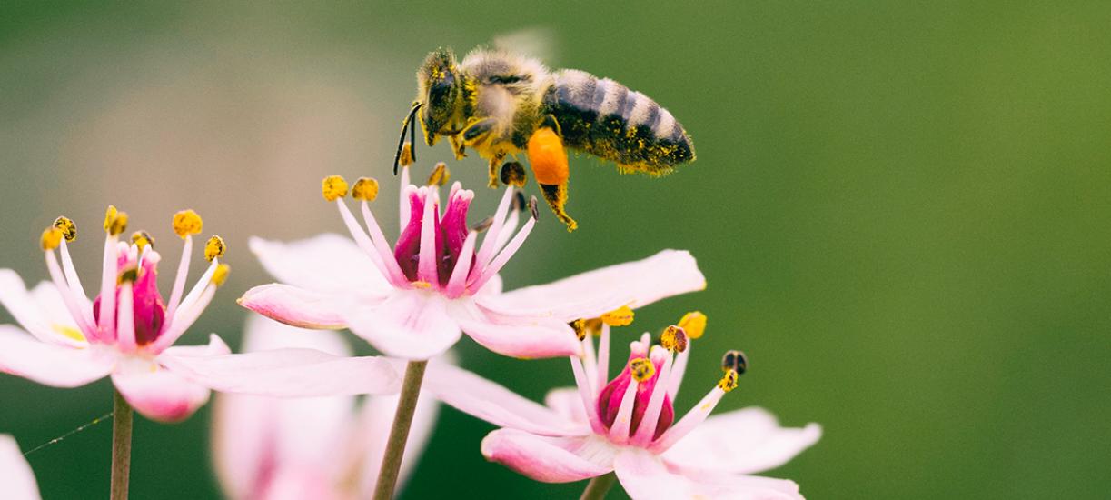 Comment attirer les pollinisateurs dans votre jardin