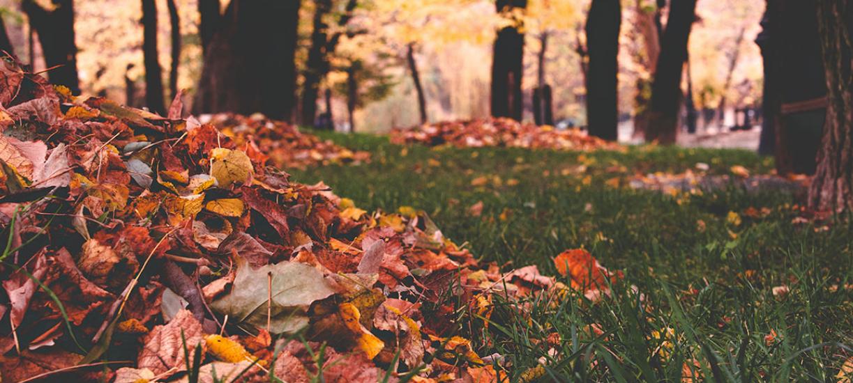 Le ramassage des feuilles mortes, nos conseils.
