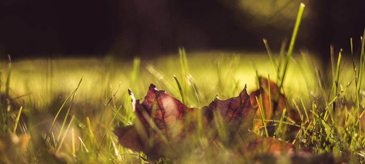 L'entretien de la pelouse en automne.