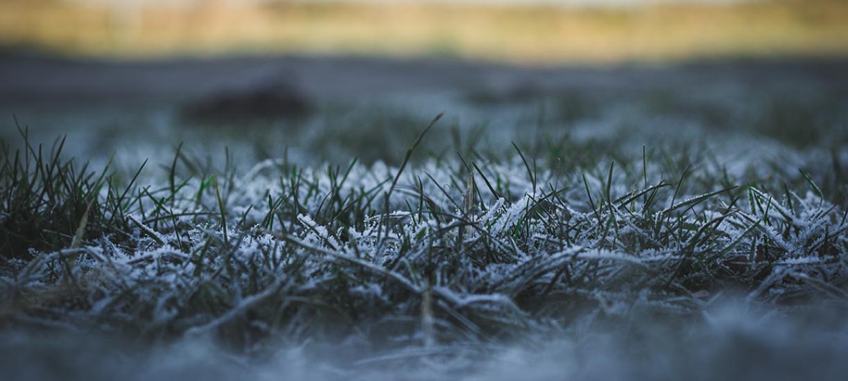 Comment entretenir sa pelouse en hiver? Voici les conseils de Cmonjardinier.