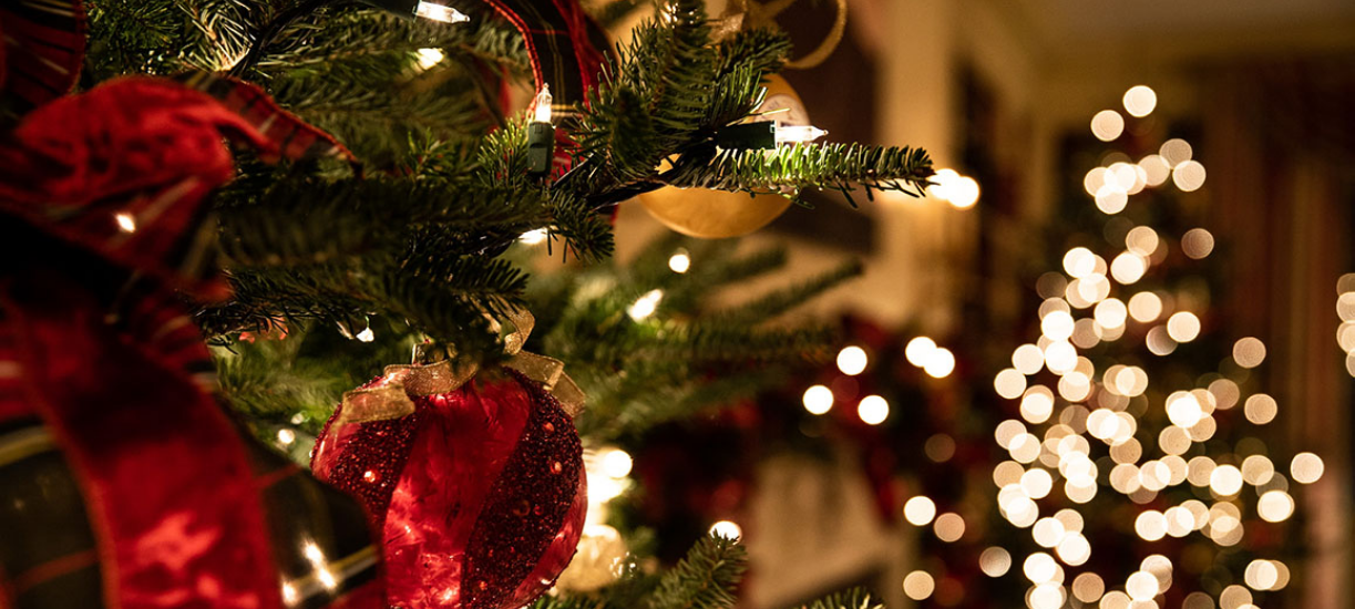 Comment choisir et entretenir son sapin de Noël? Voici les conseils de Cmonjardinier.