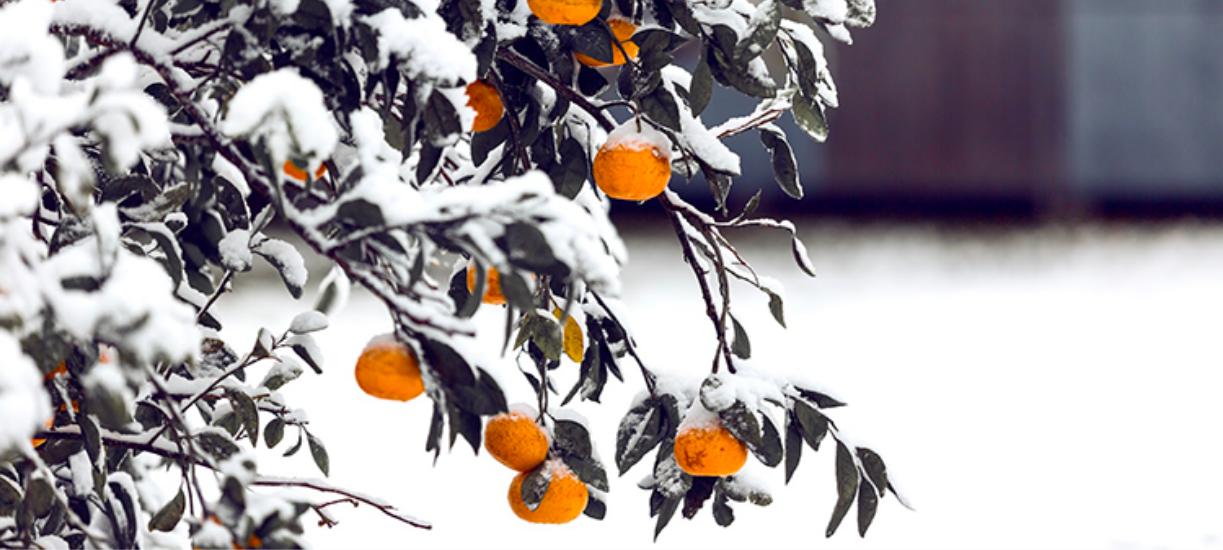 Comment faire un jardin d'hiver? Cmonjardinier vous explique où le placer et quelles plantes y mettre !
