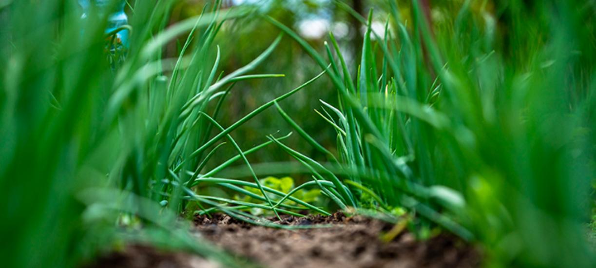 Découvrez le jardinage écologique grâce à notre partenaire Lucas Engelbach.