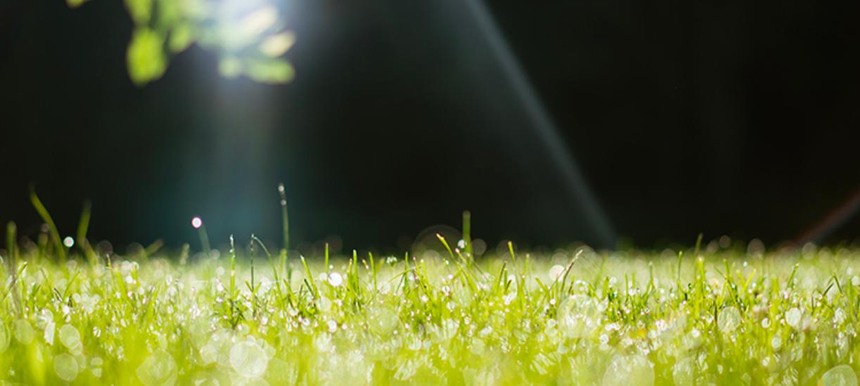 Comment faire un bon entretien de la pelouse en été ? Cmonjardinier vous donne ses astuces et conseils pour un beau gazon.