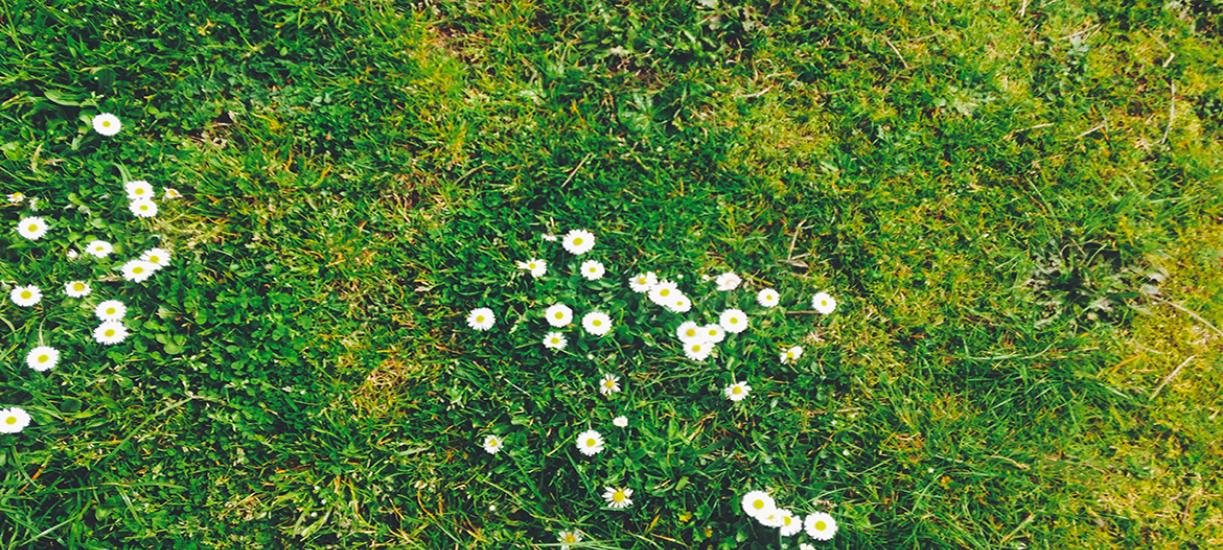 Comment refaire un gazon abimé? Cmonjardinier vous donne astuces et conseils pour récupérer une belle pelouse.