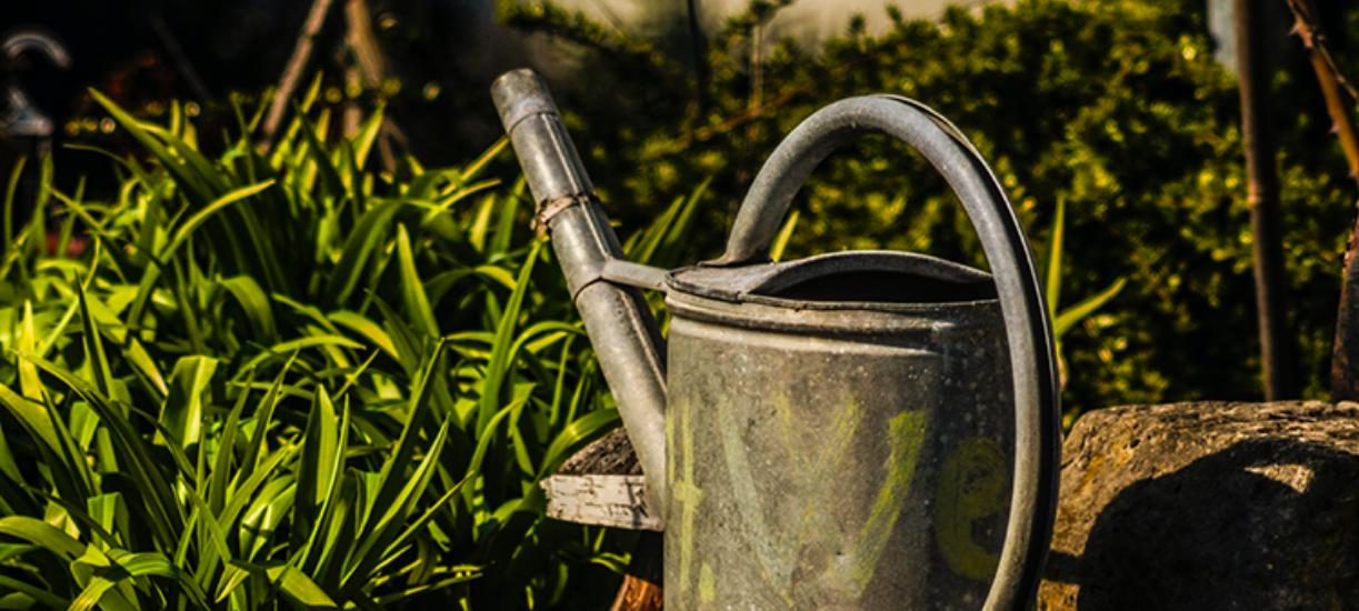 L'arrosage écologique au jardin devient de plus en plus important dans notre société. On vous donne astuces et conseils pour économiser l'eau dans votre jardin.