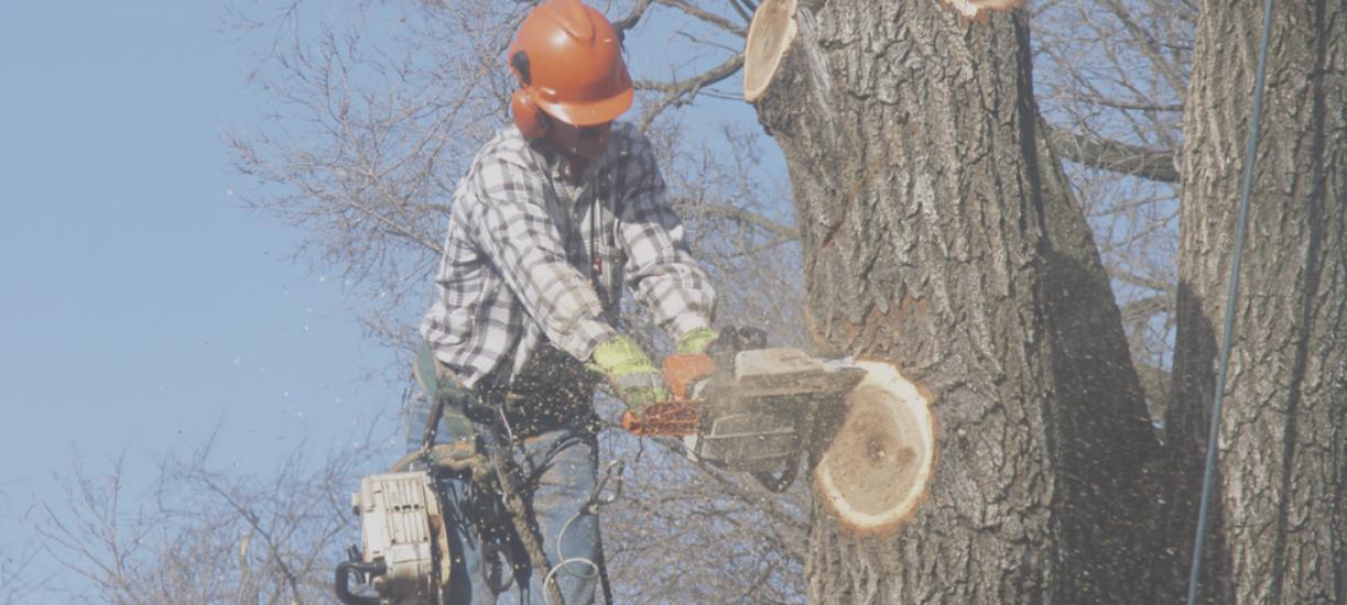 Comment élaguer un arbre ? Cmonjardinier vous explique tout sur cette discipline très réglementé et vous donne quelques conseils pour vous aider à planifier cette réalisation.