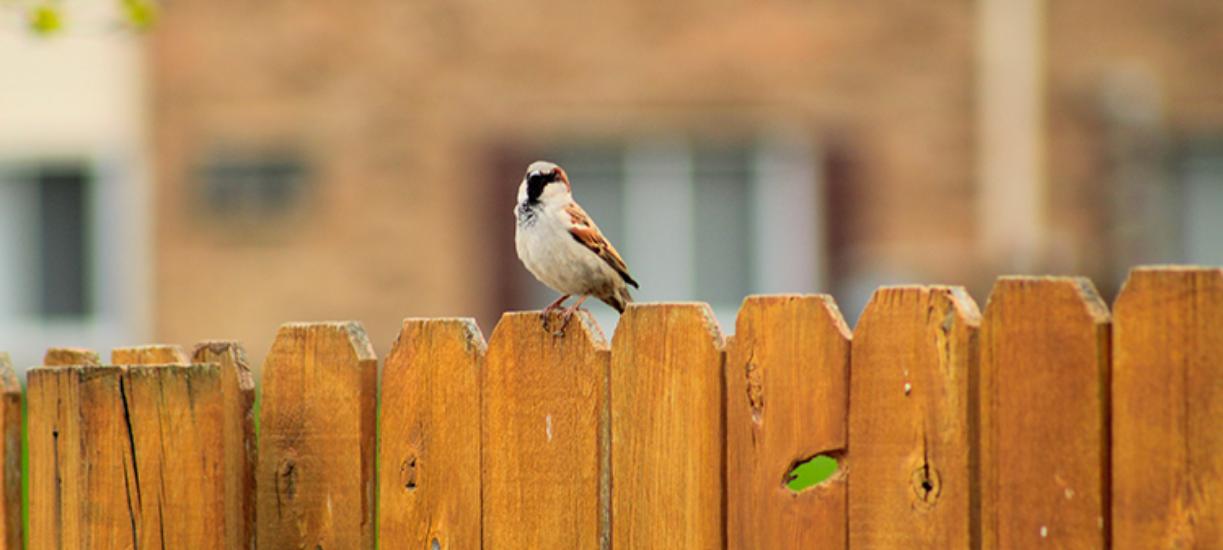 Comment aménager son jardin et cacher le vis-à-vis ? Cmonjardinier vous donne ses astuces et conseills.