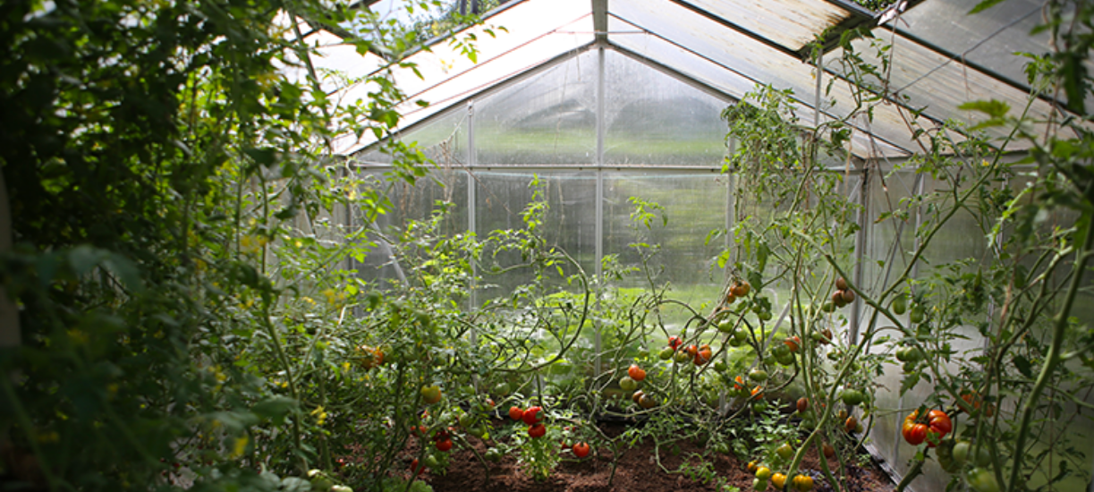 Cultiver sous serre froide en hiver Cmonjardinier vous explique tout sur ses avantages et les légumes à y faire pousser en hiver.
