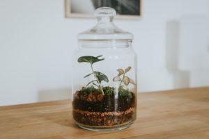 Le terrarium fait partie de la sélection fleurs et plantes de Noël de Cmonjardinier