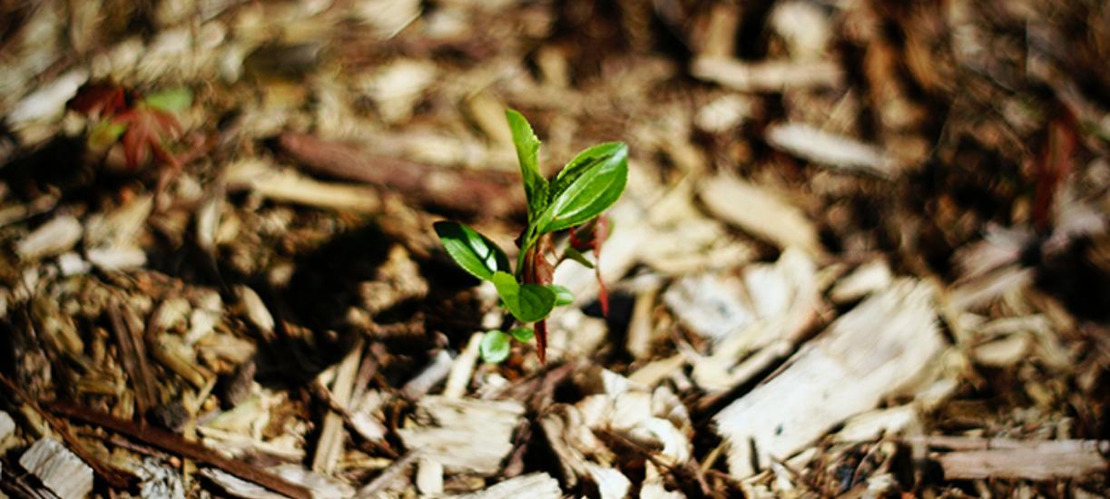 Comment pailler son jardin ? Cmonjardinier vous explique les bons gestes à avoir et vous donne ses conseils.