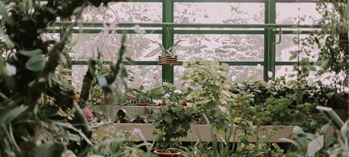 Entretien du jardin en hiver ? Cmonjardinier vous dit tout sur les bons gestes à avoir.