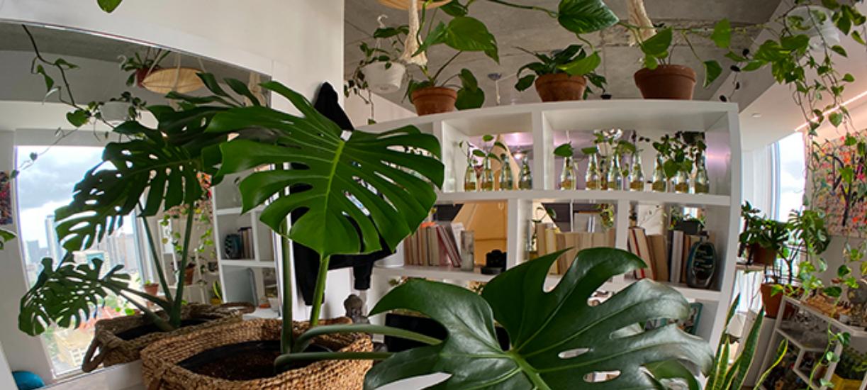 Cmonjardinier vous fait une sélection de 7 plantes d'intérieur faciles à entretenir.