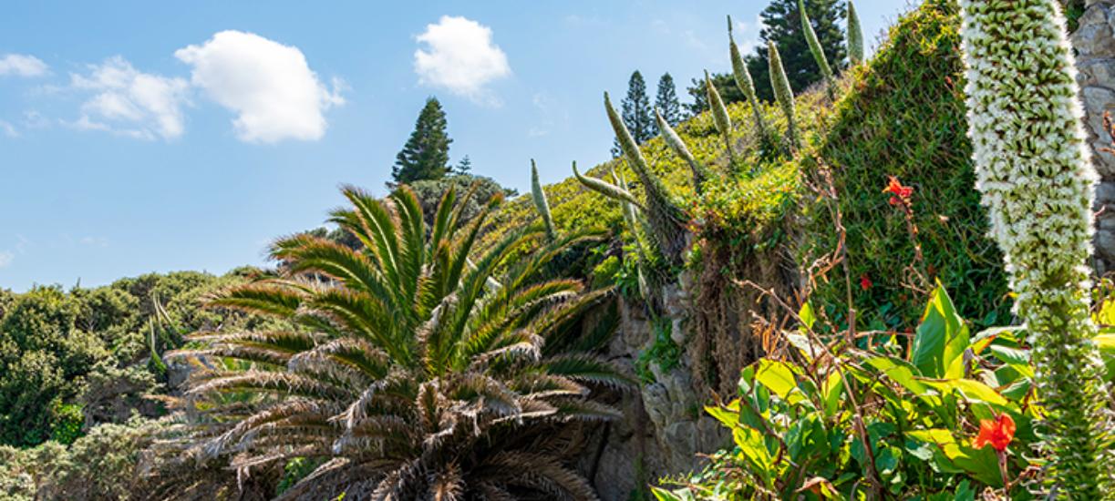 Voici une liste non exhaustive des plantes exotiques envahissantes.