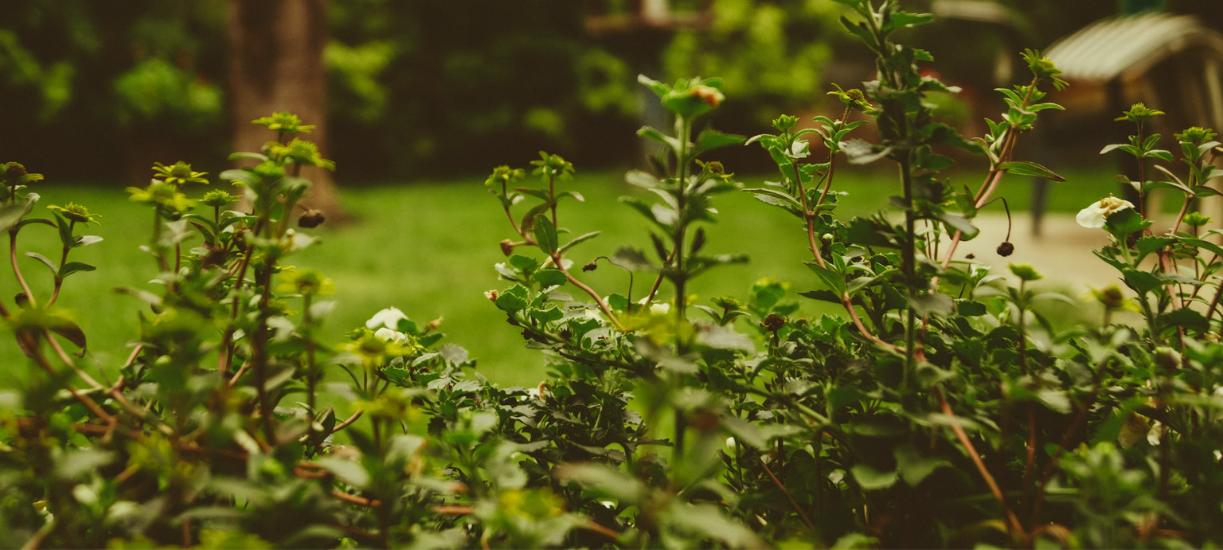 Quel matériel choisir pour une intervention dans le jardin d'un particulier ? Cmonjardinier vous dit tout.