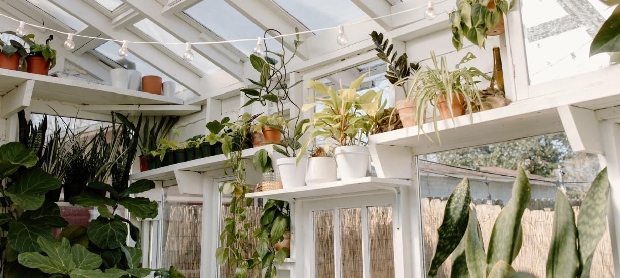 Cmonjardinier vous propose une petite sélection de plantes à mettre dans une véranda non chauffée.