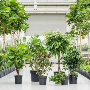 Plantes d'intérieur en entreprise