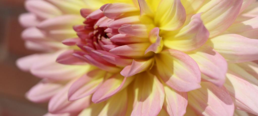 Cmonjardinier vous fait une sélection de fleurs à floraison tardive