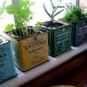 Pots de fleurs originaux et insolites en boite à thé