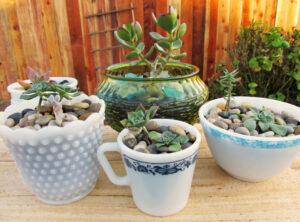 Pots de fleurs originaux et insolites en tasse